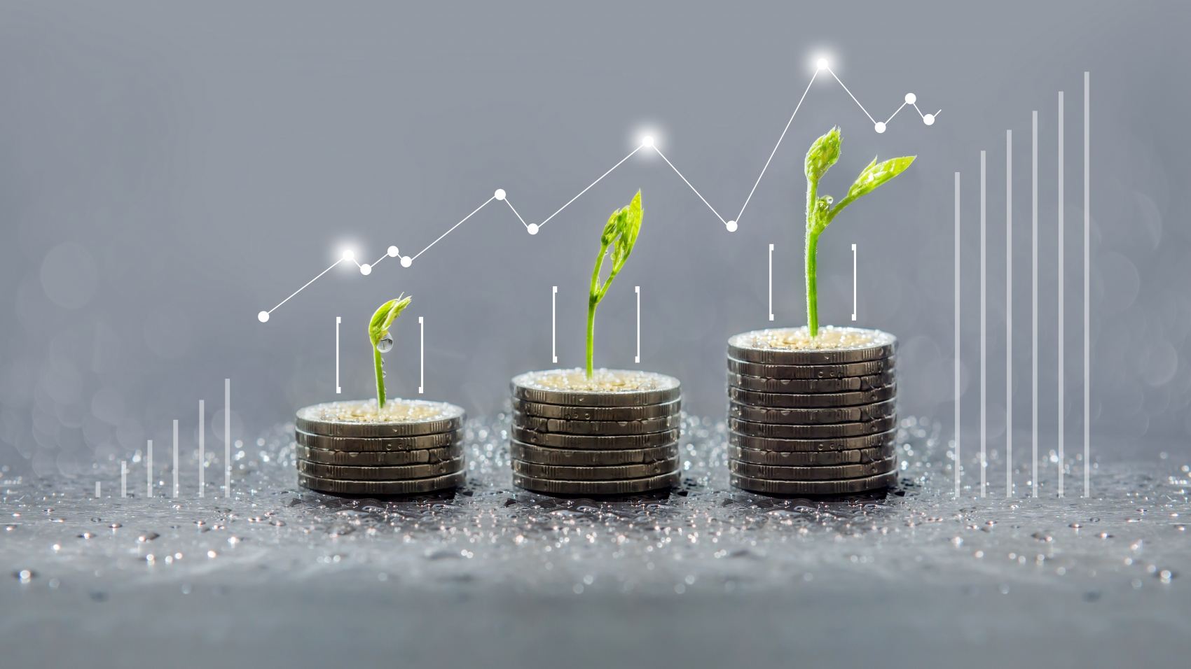 Tree growing on coins, Business save and growing finance